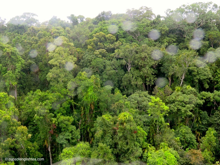 skyrail-kuranda-rainforest