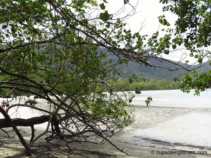 cape-tribulation-beach-trees