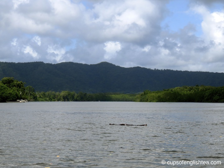 cap-tribulation-daintree-river-crocodile