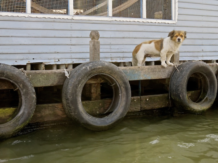 dog-floating-house-kompong-chhnang