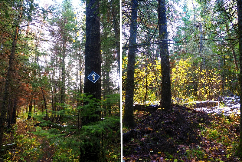 Whiteshell Fall Forest