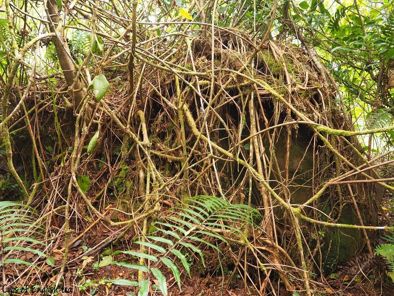 Roots Tree Costa Rica