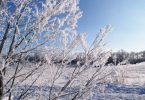 Rime Ice Tree Frost Manitoba